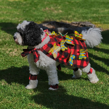 Pets display their clan colours